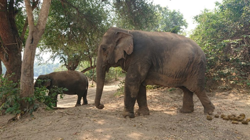 elephants-world