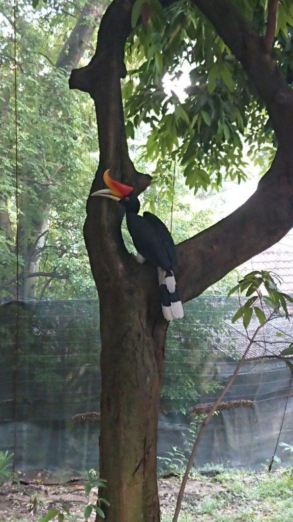 bird-park-1