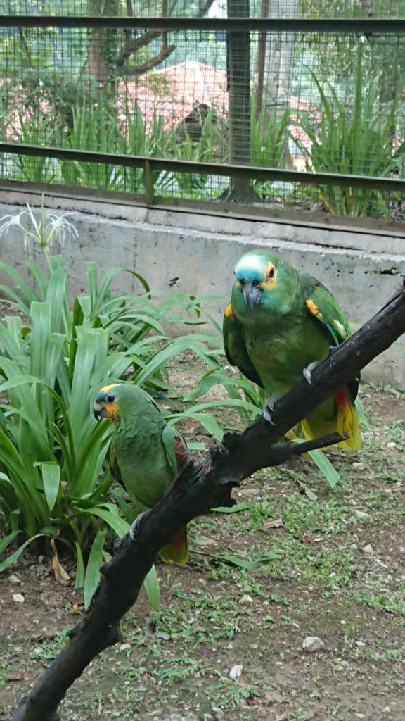 bird-park-2