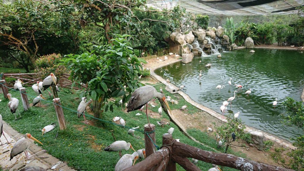 bird-park-4