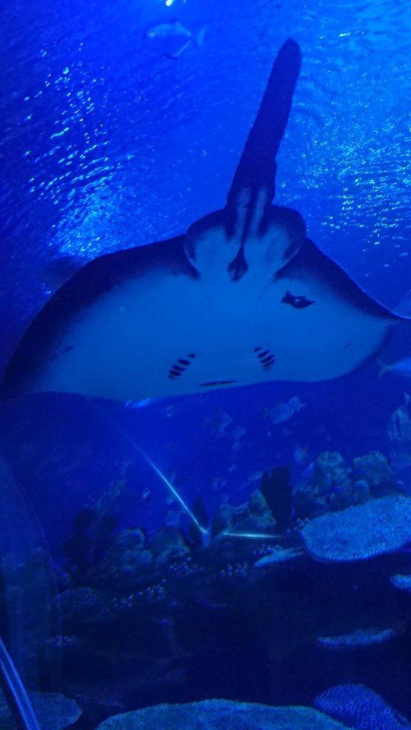 klcc-aquaria-5