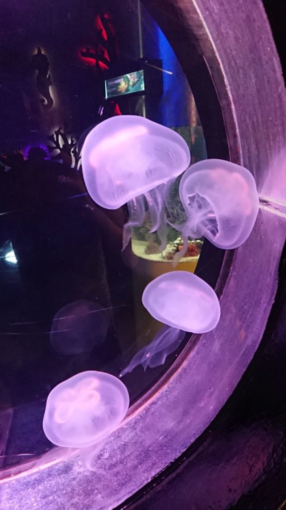 klcc-aquaria-6