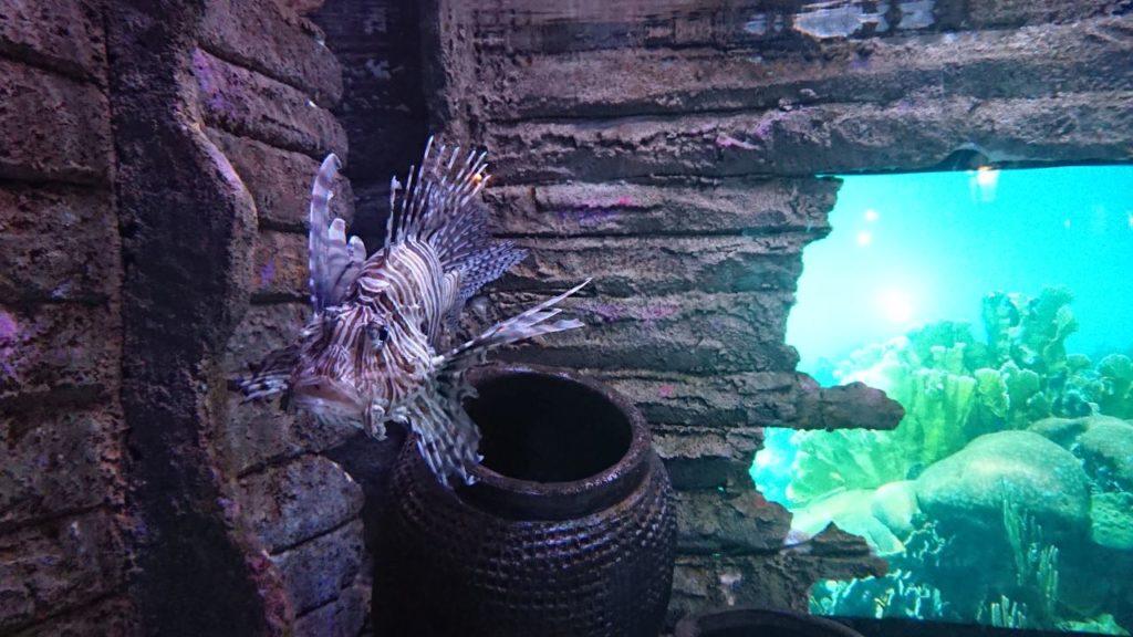 klcc-aquaria-kuala-lumpur