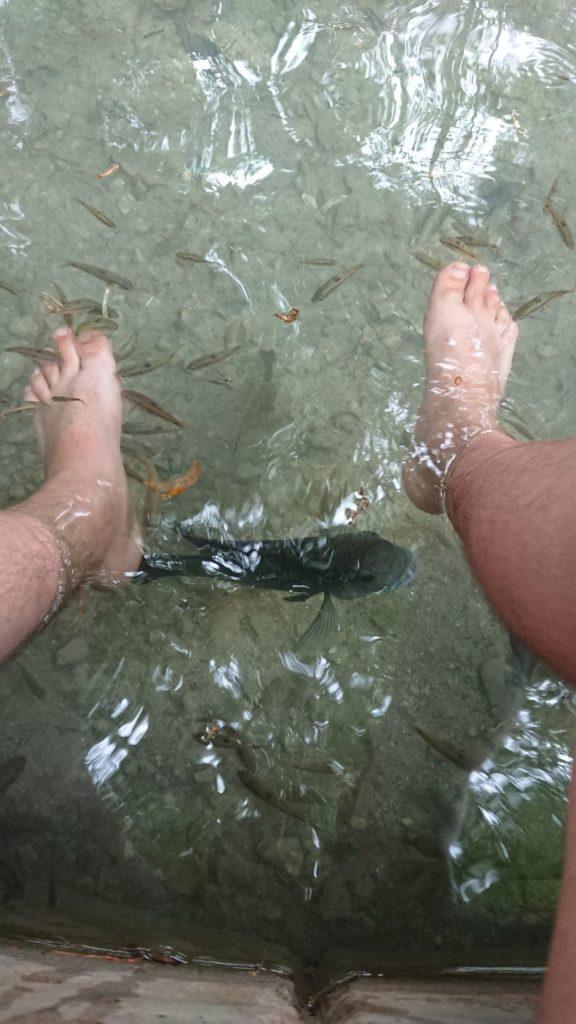 rybki-jedzące-stopy