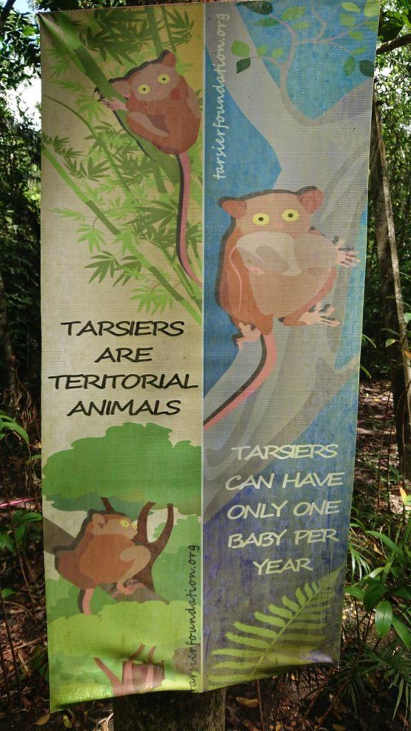 tarsier-info-oniontrip