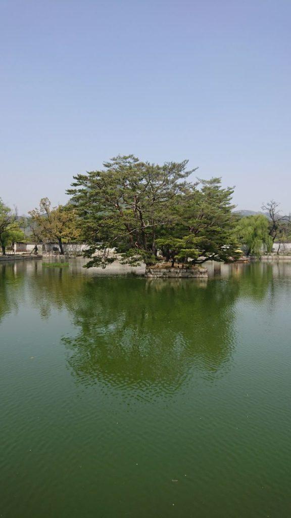 gyeongbokgung-palace-drzewo